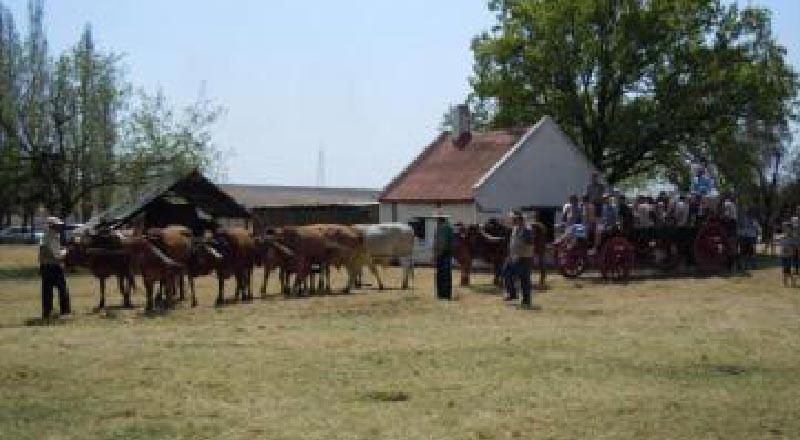 SAVTEC - Nasionale Skou 2011 - 37 - Ossewaritte